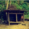 picture of dog chained in dog house amid jungle like foliage